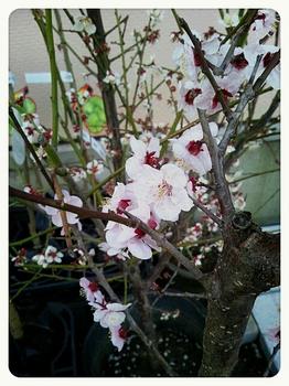 2014-03-16-22-57-29_deco.jpg