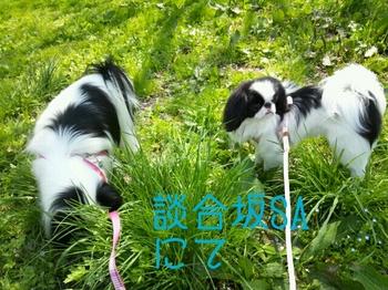 2014-04-26-10-59-47_deco.jpg