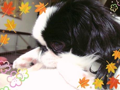 2014-10-24-21-33-04_deco.jpg