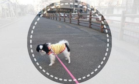 ichigo (2).jpg