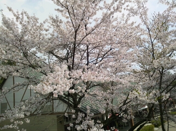 2014-04-26-14-31-11_photo.jpg