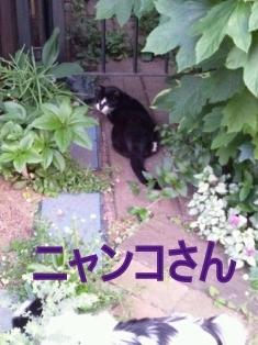 2014-05-19-18-31-09_photo.jpg